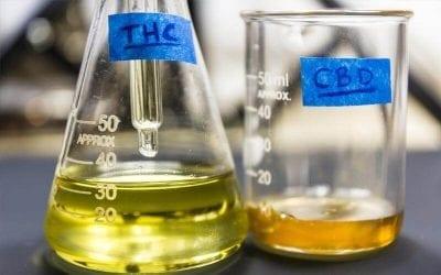 Cannabinoid and CBD Oil: The Basics