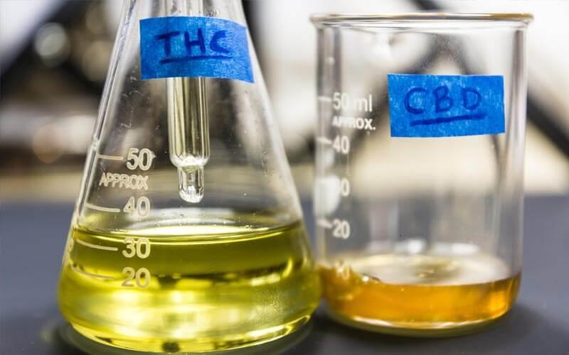 El cannabinoide y el aceite de CBD: lo básico